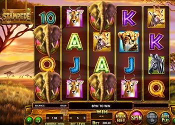 Stampede - Video Slot Game