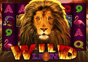 Wild Lion - Video Slot